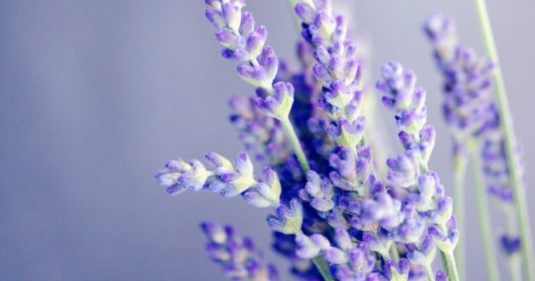 10 Things to Make with Homemade Lavender Syrup