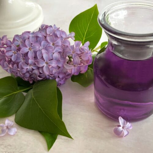 lilac syrup with lilac flowers