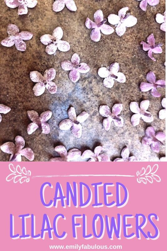 candied lilac flowers