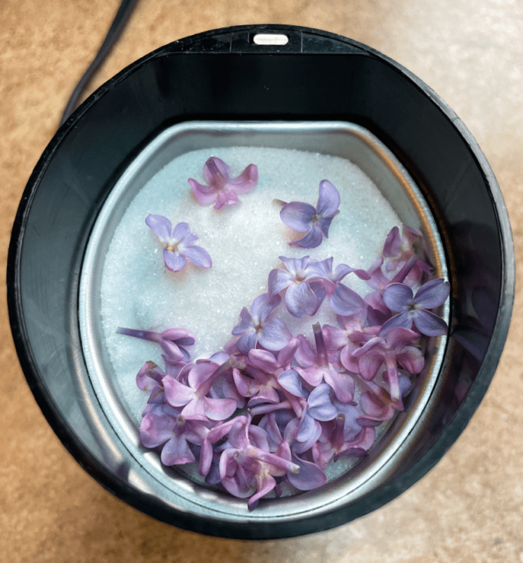 lilacs and sugar in a grinder