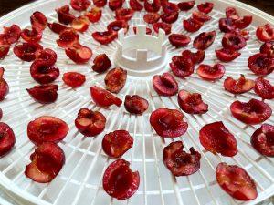 sliced cherries on a dehydrator tray