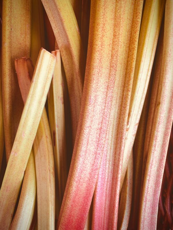close up of fresh rhubarb