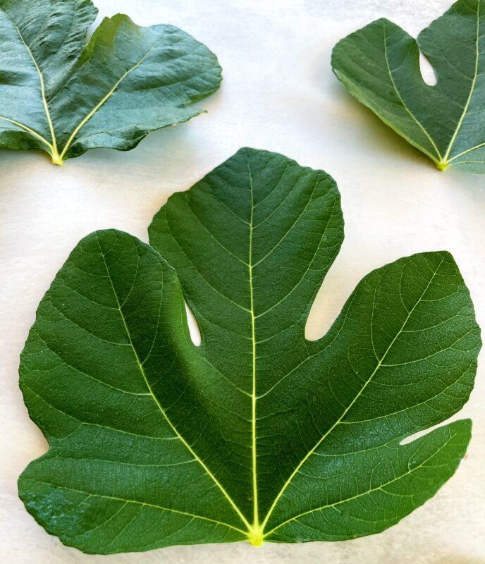 fresh fig leaves
